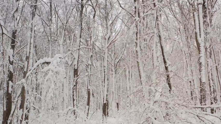 Winter landscape with snowy birch trees in the park. Winter snowy forest with trees in the snow. | Shutterstock HD Video #1070781433