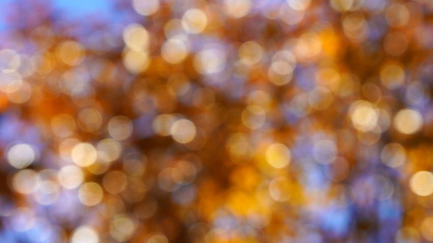 Natural gold abstract blurred lights bokeh background. Defocus | Shutterstock HD Video #1070787709