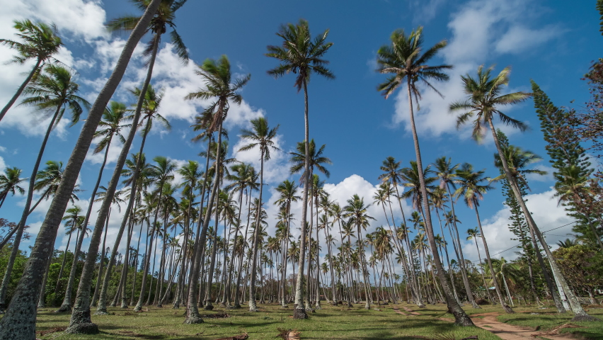 Time lapse of clouds blowing over tall palm trees, tropical sunny landscape | Shutterstock HD Video #1070791075