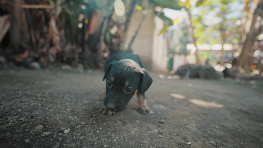 Beautiful black and brown colored playful puppy with a wide lens | Shutterstock HD Video #1070791570
