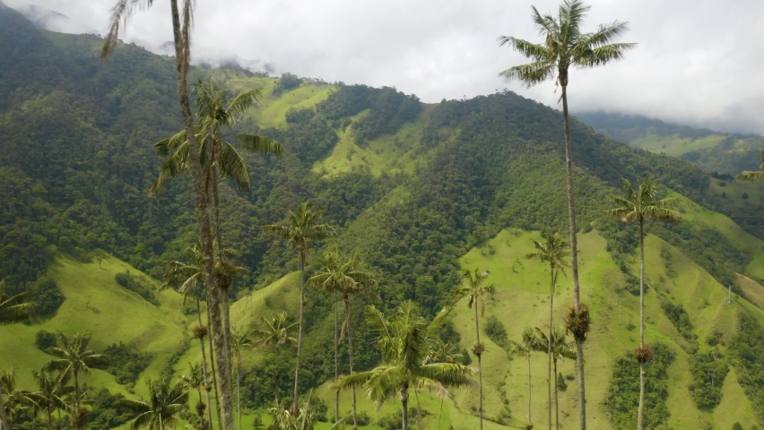 Drone Flies Through Wax Palm Trees with Green Mountain in Background. Cocora Valley, Colombia | Shutterstock HD Video #1070792251