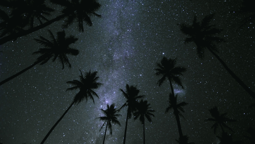 Night sky Milkyway star time lapse with silhouette palm trees - Magellanic cloud