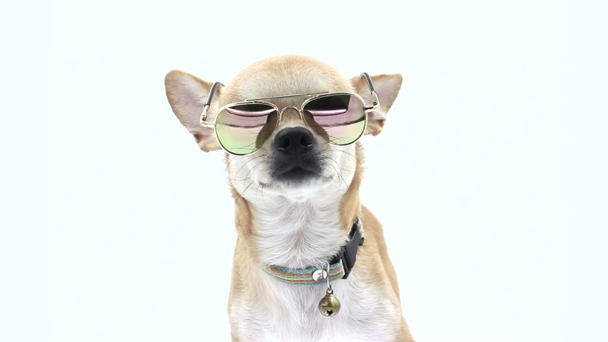 Dog In Sunglasses on isolated white | Shutterstock HD Video #1070799904