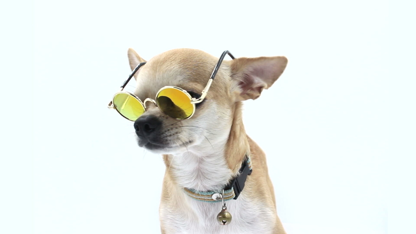 Dog In Sunglasses on isolated white | Shutterstock HD Video #1070799997