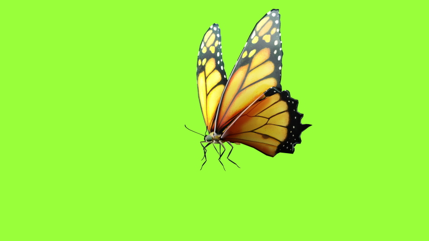 Butterfly flying slow motion animation sequence on green screen with chroma key.Seamless loop. Close up 3D rendering | Shutterstock HD Video #1071016390