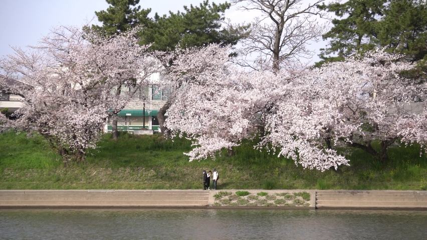 Sakura along the river in Okazaki | Shutterstock HD Video #1071124621