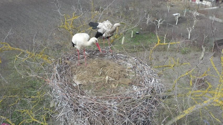 Aerial view, Two young White storks in a nest on a pillar on background blue sky with clouds. White stork (Ciconia ciconia) | Shutterstock HD Video #1071136294