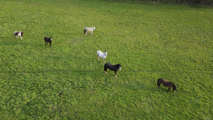 Aerial of a herd of Horses grazing and playing in a lovely afternoon by the sun | Shutterstock HD Video #1071136783