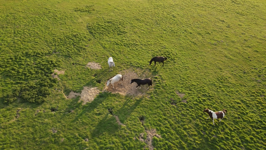 Aerial of a herd of Horses grazing and playing in a lovely afternoon by the sun | Shutterstock HD Video #1071136786