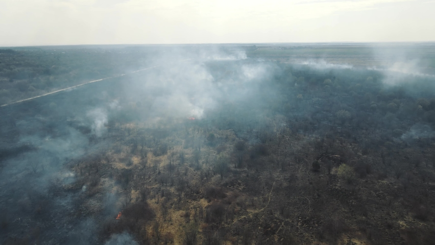Flight over the field after a large-scale fire. Burnt grass and trees. The field is covered with smoke and ashes. | Shutterstock HD Video #1071136843