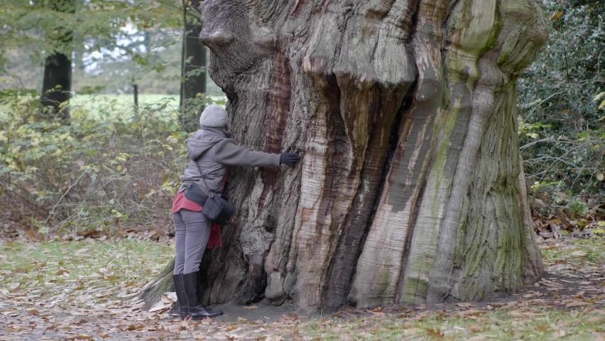Woman hugs big ancient tree. Video 4K | Shutterstock HD Video #1071139462