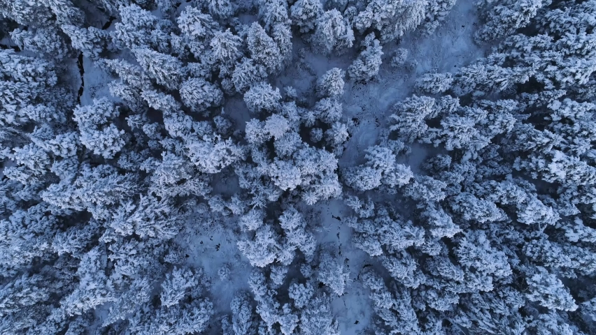 Aerial top down view of snowy forest | Shutterstock HD Video #1071142093