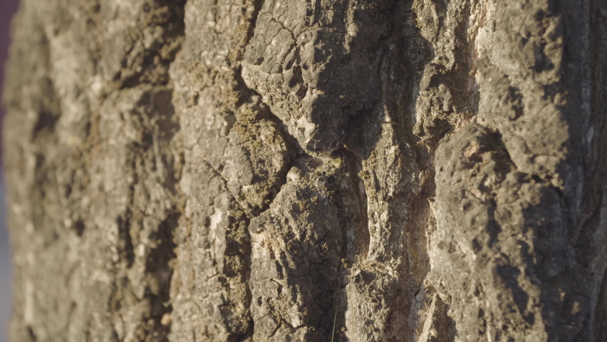 Selective focus on ants walking up tree trunk, natural light | Shutterstock HD Video #1071142858