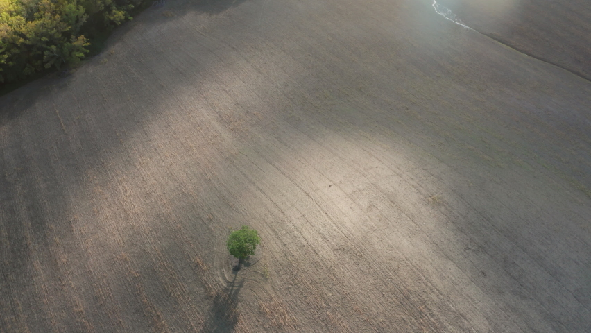 4K drone footage of empty ploughed field with lonely tree in middle in Italian Toscana. Environmental concept. | Shutterstock HD Video #1071142912