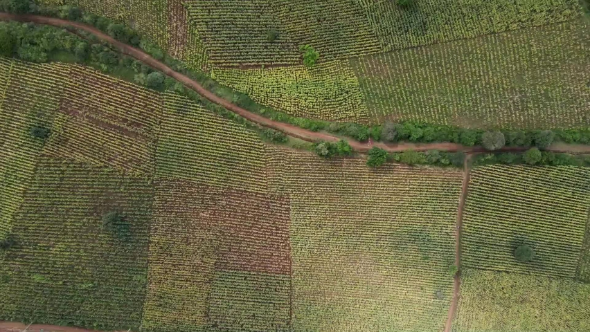 Loitokitok-Kenya-March 2021:-Loitokitok, Kenya. Food production in Africa Kenya by farmers. poor farmers-poor farms. Corn-Maize farm ,view of drone-Agriculture Africa. Agronomics. | Shutterstock HD Video #1071180277