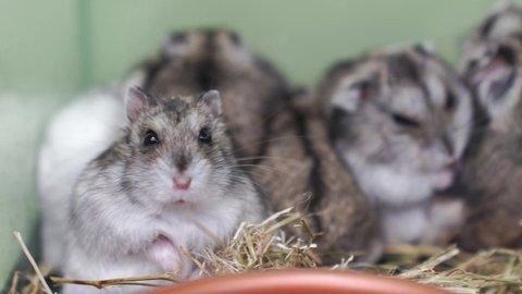 Videos hamster free Pornhub's wild,