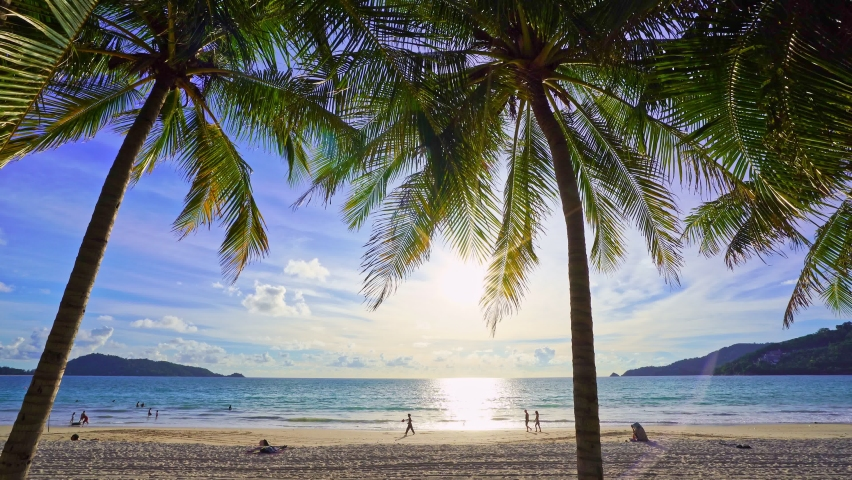 Beautiful coconut palm trees on the beach Phuket Thailand, Patong beach Islands Palms on the ocean. palms grove on the beach with white sandy Sunset sky Summer landscape background