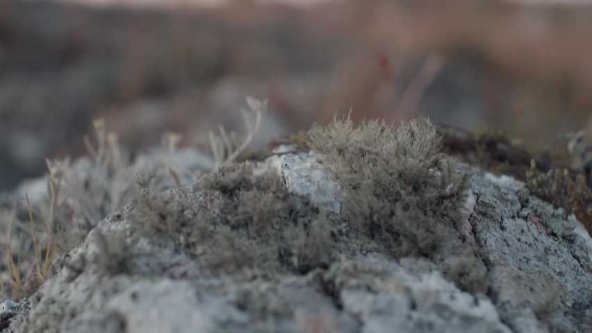 Detail of moss on a rock, after a camera movement pastures are seen moving gently in the wind in a field before dawn. | Shutterstock HD Video #1071957622