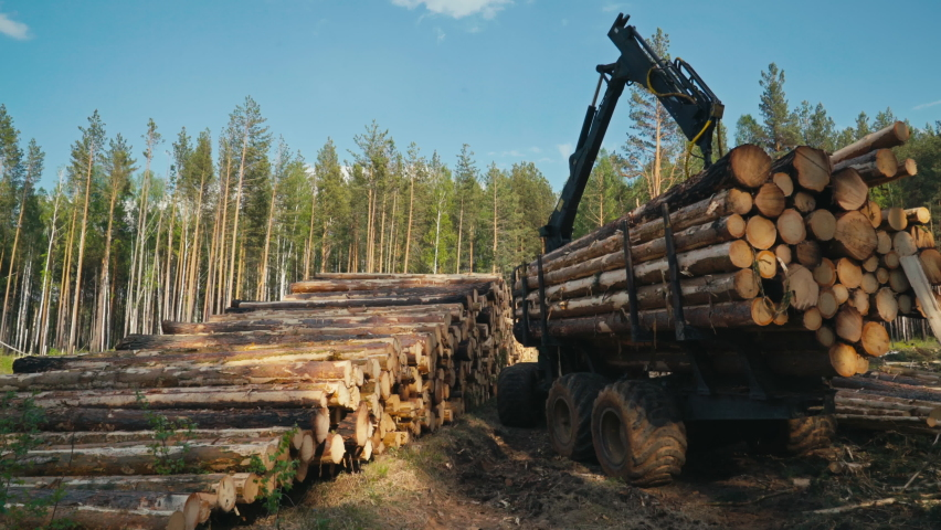Unloading Wood Cargo From Truck To Ground In Forest. Stacking Wood Cargo In Piles. Wood Cargo Transportation. Collecting Plant For Materials Production. Forestry And Lumber Industry. Deforestation.