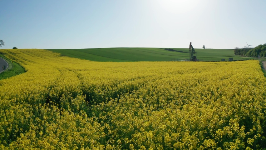 CANOLA FIELDS WITH OIL PUMPIMG RIG - aerial drone shot flying very low and slow over flowering yellow canola fields towards an oil pumping rig in the background in the soft evening light Royalty-Free Stock Footage #1073303318