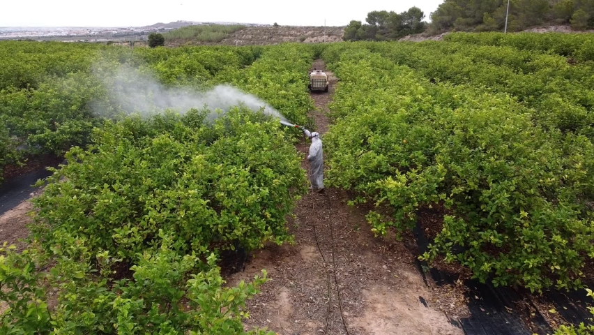 spray fumigation, pesticide or pest industrial chemical agriculture. Man spraying pesticides on fruit lemon growing plantation. Man in mask fumigating. Royalty-Free Stock Footage #1074410036