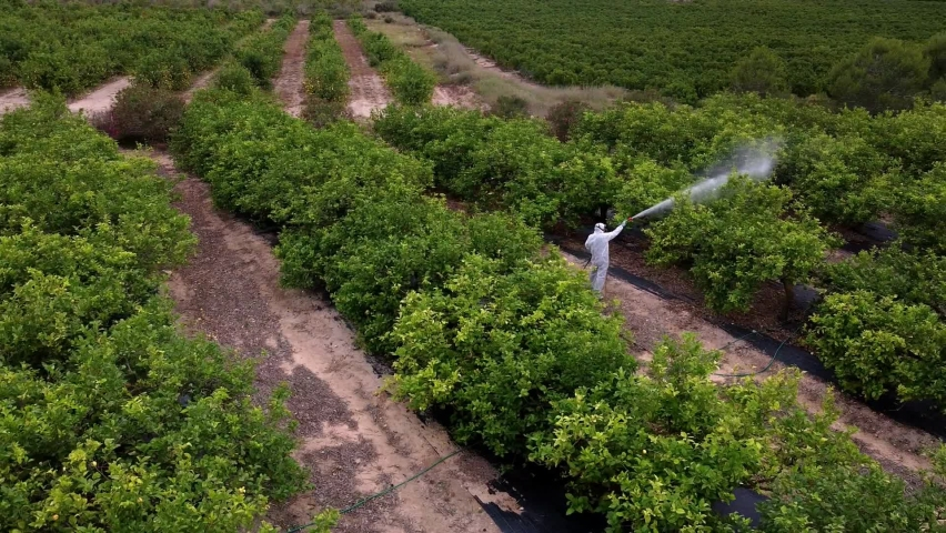 spray fumigation, pesticide or pest industrial chemical agriculture. Man spraying pesticides, pesticide, insecticides on fruit lemon growing plantation. Man in mask fumigating. Royalty-Free Stock Footage #1074410231