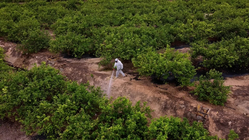 spray fumigation, pesticide or pest industrial chemical agriculture. Man spraying pesticides, insecticides on fruit lemon growing plantation. Man in mask fumigating. Royalty-Free Stock Footage #1074410237