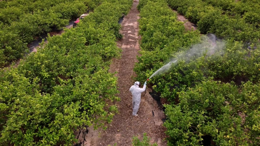 spray fumigation, pesticide or pest industrial chemical agriculture. Man spraying pesticides, pesticide, insecticides on fruit lemon growing plantation. Man in mask fumigating. Royalty-Free Stock Footage #1074410249