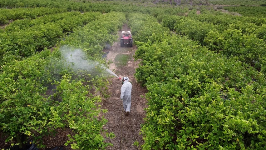spray fumigation, pesticide or pest industrial chemical agriculture. Man spraying pesticides, pesticide, insecticides on fruit lemon growing plantation. Man in mask fumigating. Royalty-Free Stock Footage #1074410261