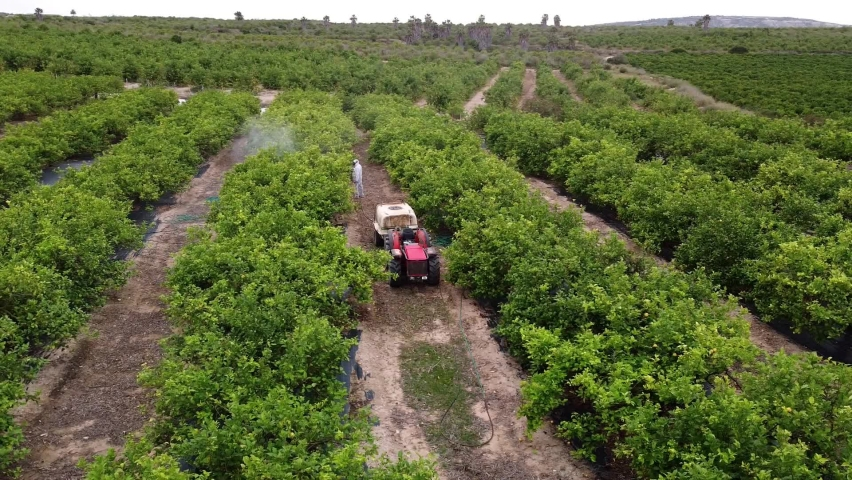 spray fumigation, pesticide or pest industrial chemical agriculture. Man spraying pesticides, pesticide, insecticides on fruit lemon growing plantation. Man in mask fumigating. Royalty-Free Stock Footage #1074410267