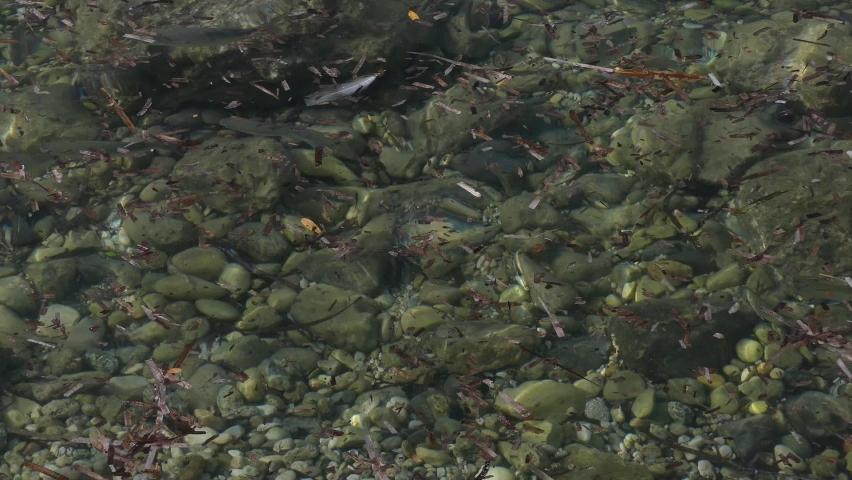 Fish under water up close in Corfu Greece   Shutterstock HD Video #1074946970