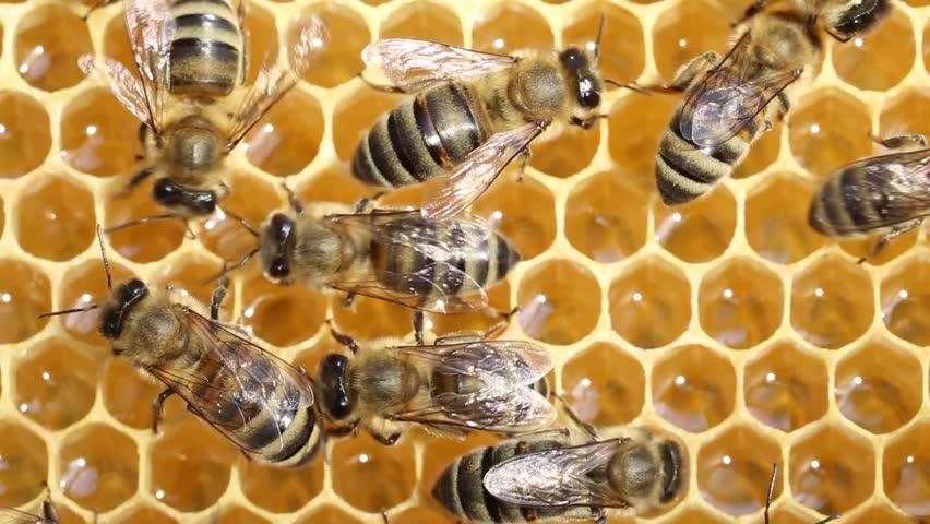 обычное жаркое, как пчелы в апреле носят мед фото обстоятельство меняется вот