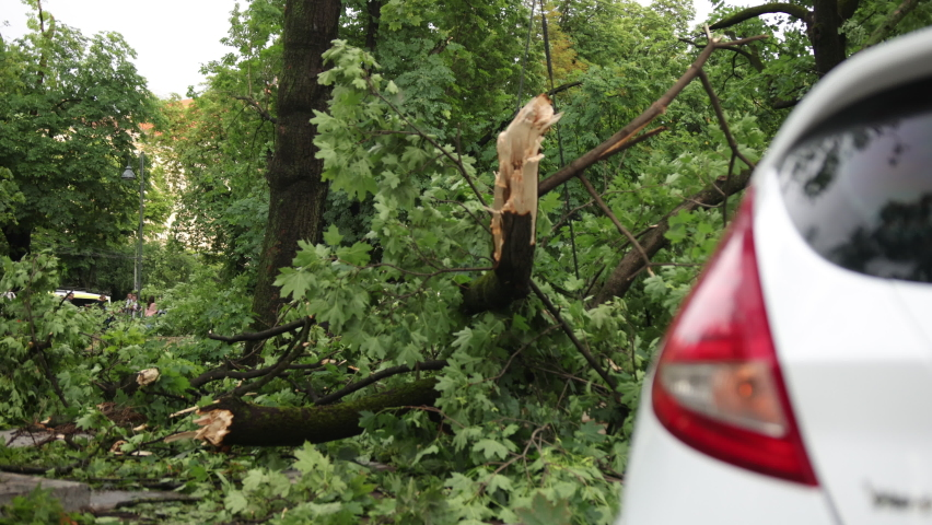 Heavy rain, storm gusts caused an accident an old tree fell on a car during a storm. Vehicle under fallen tree. Wood fall down on car during hurricane. Accident the vehicle crashed into a wood