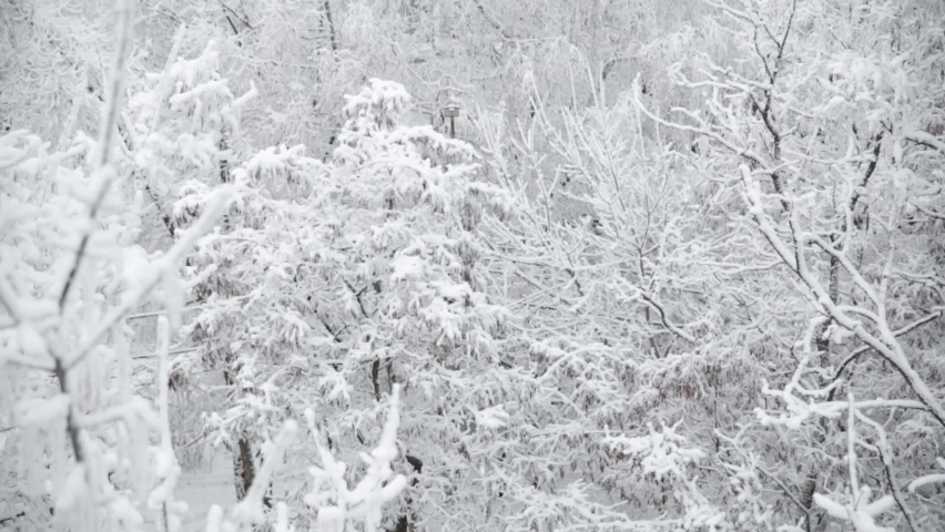 The first snow falls on the tree branches. Heavy snowfall   Shutterstock HD Video #1076767154