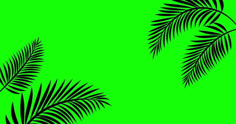 4K Stock video animated footage, green screen background, tropical tree branch, leaves moving in wind. 2d Seamless loop animation, Isolated Palm leafs, realistic plant, swaying leaf shadow silhouette