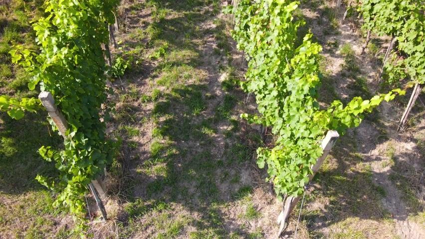 Vineyard in Europe Aerial 4K Video   Shutterstock HD Video #1078510415