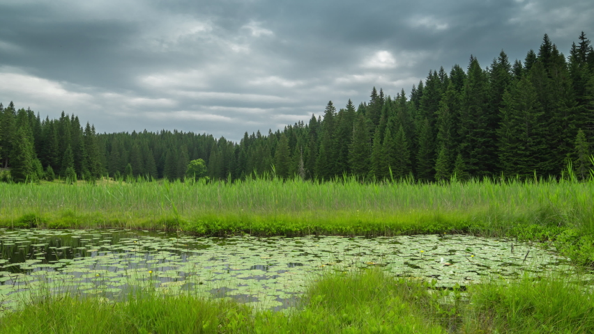 Water lilies on the Barno lake in National park Durmitor, Montenegro, Europe. Timelapse 4K.