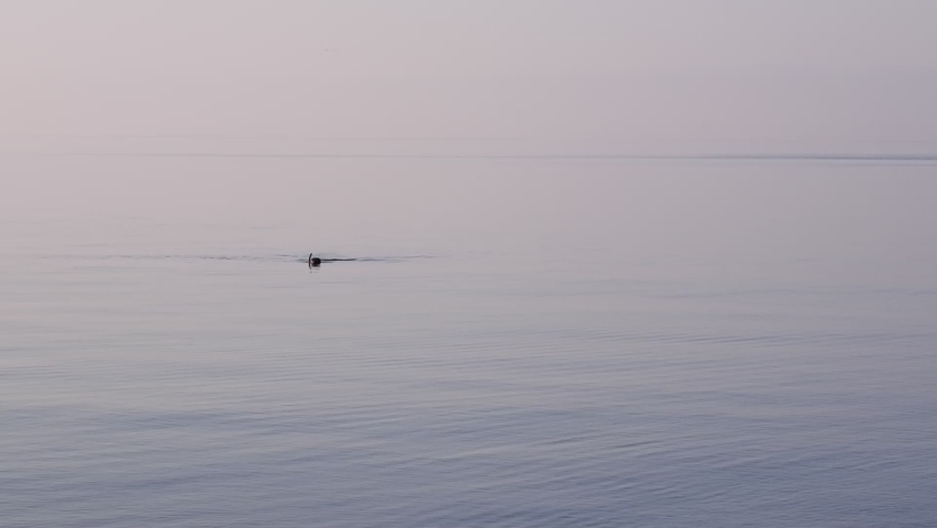 A diver snorkeling alone in the sea on a foggy morning. Wide shot. Alone in the sea. Solitude, calmness and a mystical video.   Shutterstock HD Video #1079054363