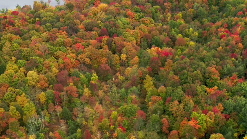 Beautiful colorful fall aerial 4K. Scenic autumn foliage in vibrant yellow, orange and red leaves on top of trees. Cinematic drone flight above fall forrest in mountains of Vermont on cloudy day, USA   Shutterstock HD Video #1080946928