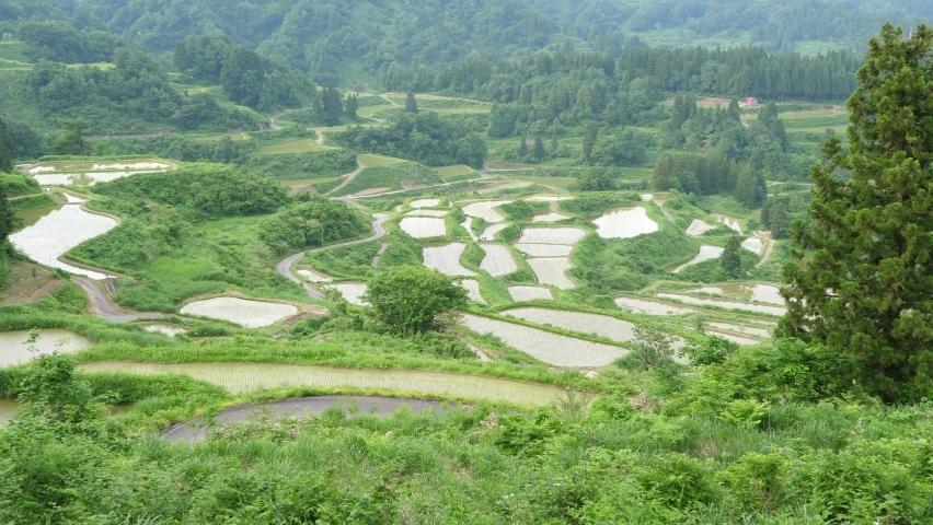 Beautiful rice terraces in Japan. (Tilt) | Shutterstock HD Video #1080984257