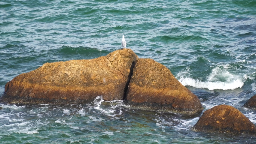A seagull sits on a stone in the blue sea | Shutterstock HD Video #1081040765