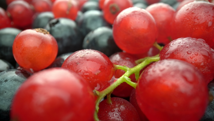 Wild berries, red currants and black lingonberries in motion, in slow motion. Fresh fruits for dessert. Extreme macro. | Shutterstock HD Video #1081046576