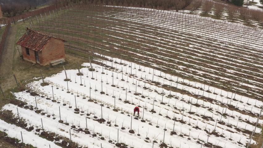 A farmer working in a vineyard in winter time. Snow, patterns, farm, hills, nature, business. 4K | Shutterstock HD Video #1081059386