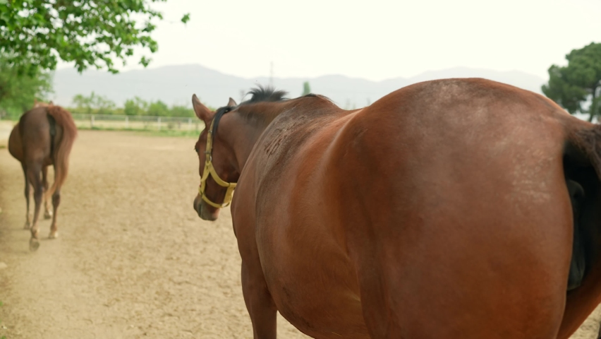 Horses at the racehorse farm in summer day. Back view of brown horses standing behind fence at a horse farm. Slow motion.  | Shutterstock HD Video #1081061006