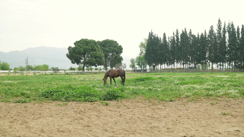 Horses at the racehorse farm in summer day. Brown horse standing behind the fence at a horse farm. Horse feeding on green grass. Slow motion. | Shutterstock HD Video #1081061048