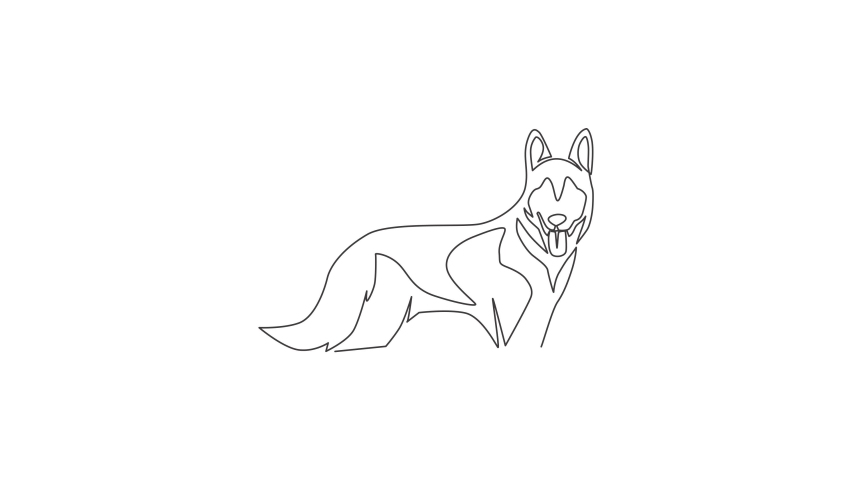 Animated self drawing of single continuous line draw simple cute siberian husky puppy dog icon. Pet animal logo emblem vector concept. Full length one line animation illustration. | Shutterstock HD Video #1081065815