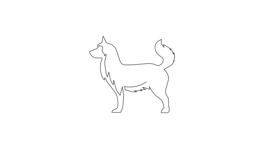 Animated self drawing of single continuous line draw simple cute siberian husky puppy dog icon. Pet animal logo emblem vector concept. Full length one line animation illustration. | Shutterstock HD Video #1081065818