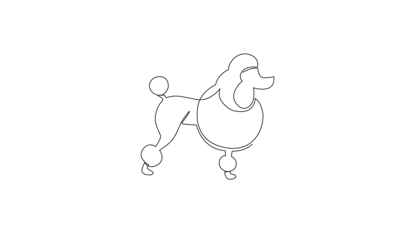 Animated self drawing of single continuous line draw simple cute poodle puppy dog icon. Pet animal logo emblem vector concept. Full length one line animation illustration. | Shutterstock HD Video #1081065821