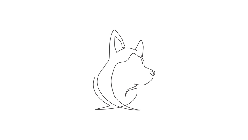 Animated self drawing of one continuous line draw simple cute siberian husky puppy dog head icon. Mammals animal logo emblem vector concept. Full length single line animation illustration. | Shutterstock HD Video #1081065827