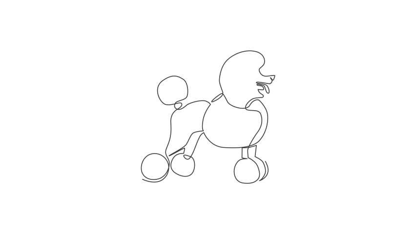 Animation of one single line drawing of simple cute poodle puppy dog icon. Pet shop logo emblem vector concept. Continuous line self draw animated illustration. Full length motion. | Shutterstock HD Video #1081065845